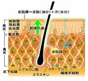 毛根の図面